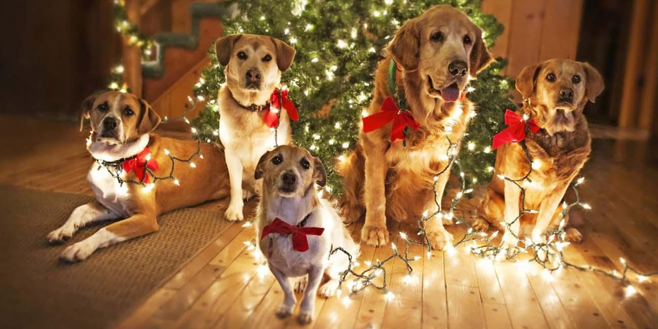 Новый 2018 год - желтой земляной собаки